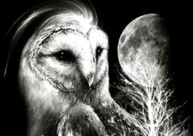 Printop - Owl Warrior