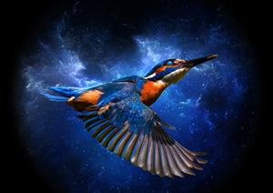 Cosmic Kingfisher